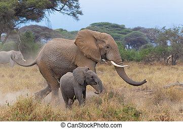 auf, ihr, behalten, baby, mutter, elefant, rennender