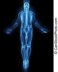 Aufregender menschlicher Körper