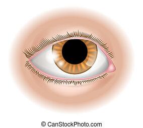 Augen-Körper-Abbildung