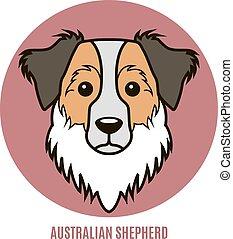 australische, shepherd., vektor, portrait- abbildung