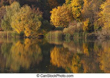 Autumnwald: Gelbe Bäume reflektieren auf der Oberfläche des Waldsees, Laub, beleuchtet von der Sonne wird golden.