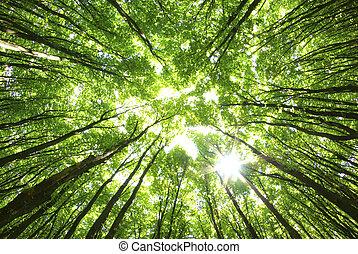 Bäume im Hintergrund