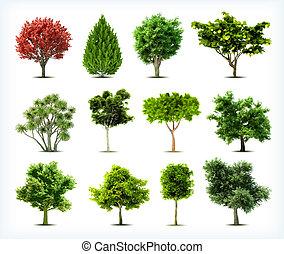 Bäume isoliert.