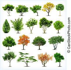 Bäume isoliert. Vector