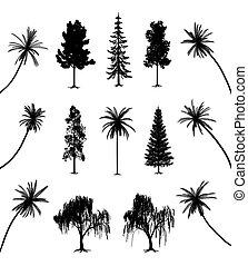 Bäume mit Wurzeln und Palmen
