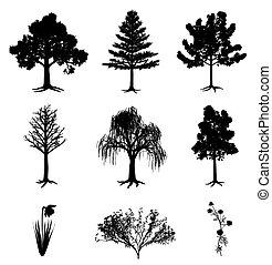 Bäume narzissus chamomile und buschig