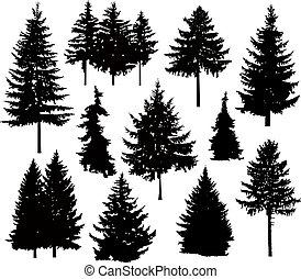 bäume, silhouette, kiefer, verschieden