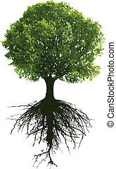 bäume, wurzeln