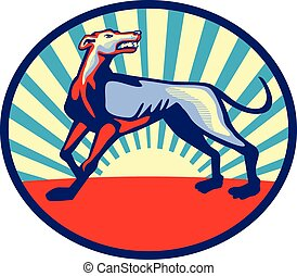 böser , retro, auf, windhund, kreis, hund, schauen