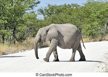 Baby-Elefant - Etosha, Namibia.
