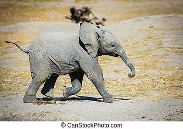 Baby-Elefant läuft seitwärts.