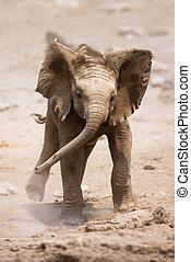 Baby-Elefant läuft