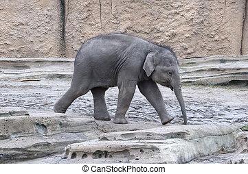 Baby-Elefant läuft.