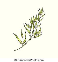 Bamboo Green Stalk mit Blättern im Zeichenstil isoliert auf weißem Hintergrund.