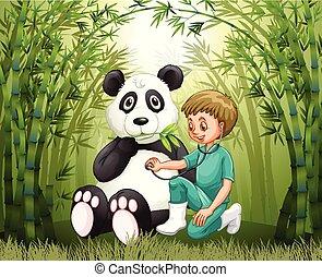 bambuswald, doktor, tierärztliche , panda