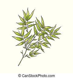Bambuszweig mit grünen Blättern im Zeichenstil, isoliert auf weißem Hintergrund.