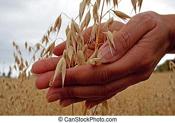 Bauern halten Getreide