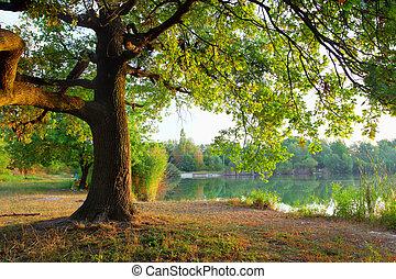 Baum im Sommerwald.