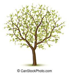 Baum mit grünen Blättern.