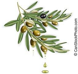 baum, olivenzweige