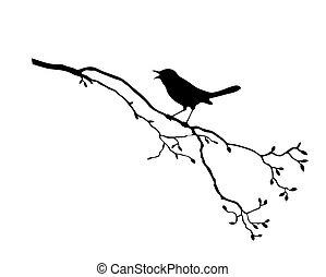baum, vektor, silhouette, vogel, zweig