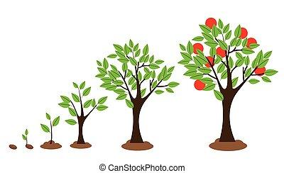 Baumwachstum.