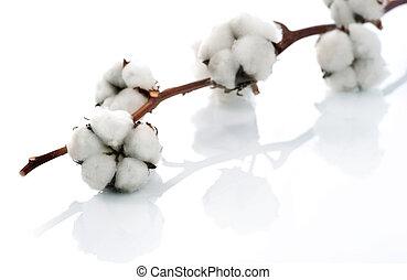 Baumwolle über Weiß