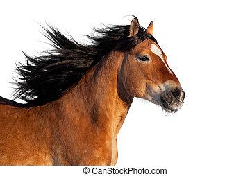 Bay aktiver Pferdekopf isoliert