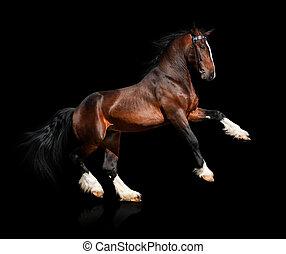 Bay Horse isoliert auf Schwarz