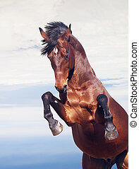 Bay Horse rückt im Himmel auf