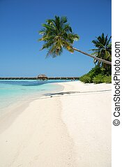 Beach Paradise mit Palme