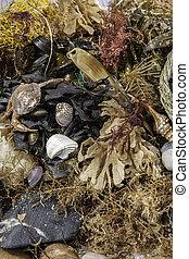 Beachcombing. Verschiedenheit von Meeresleben und Trümmern