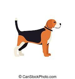 Beagle Hund - Vektorfarben ernsthafte Hunderasse stehend.