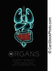 begriff, darm, organ, ikone, raum, farbe, text, mann, idee, abbildung, freigestellt, dunkel, satz, hintergrund, infektion, röntgenaufnahme, klein, kopie, organe, rotes , glühen