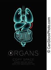 begriff, organ, ikone, raum, farbe, text, milz, mann, idee, abbildung, freigestellt, dunkel, satz, hintergrund, infektion, röntgenaufnahme, kopie, organe, rotes , glühen