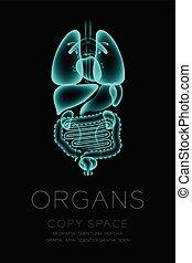 begriff, organ, raum, satz, text, normal, mann, idee, abbildung, freigestellt, dunkler hintergrund, kopie, organe, röntgenaufnahme, glühen
