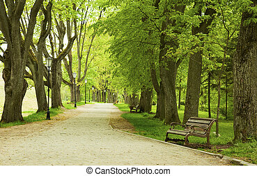 Bench im Frühlingspark