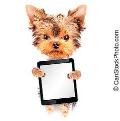 besitz, hund, pc, leer, tablette