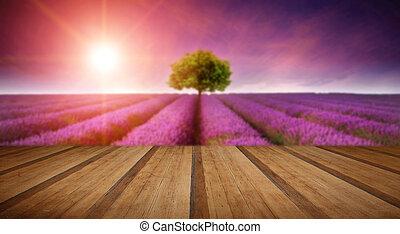Bezaubernde Lavendellandschaft Sommersonne mit einem Baum.
