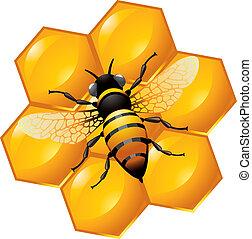 Bienen auf einem Teil der Honigwabe