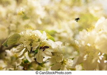 Bienen sammeln Pollen aus blühenden Apfelbäumen an einem klaren Frühlingstag.