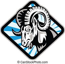 Bighorn Rammbock Schafziege