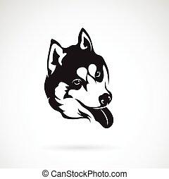 bild, hund, sibirisch, vektor, hintergrund, heiser, weißes
