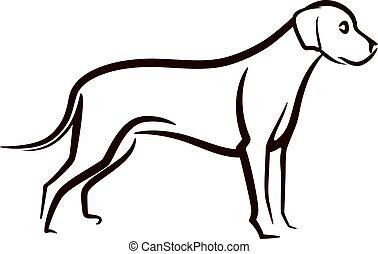 bild, labrador, hintergrund, vektor, hund, weißes