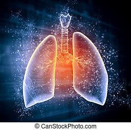 Bildliche Darstellung menschlicher Lungen