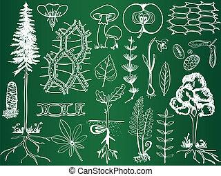 Bio-Plantageskizzen an der Schule - Botanik-Illustration