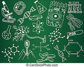 Biologische Zeichnungen an der Schultafel