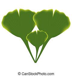 Blätter von Ginkgobiloba.