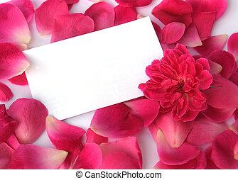 blütenblätter , weißes