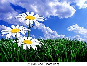 Blauer Himmel, grünes Gras und Gänseblümchen